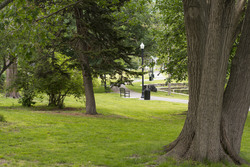 Photo of Elm park in Worcester