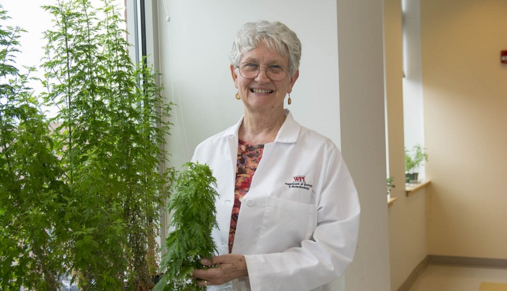 Pam Weathers is standing near a window and next to Artemisia plants. They're green, and she is holding one. She has gray hair and is wearing glasses and a white lab coat over a multicolored shirt.