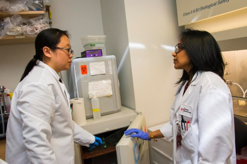 PhD candidate Bo Yang and Rao discuss the latest round of testing with Candida variants in the Rao Lab. alt