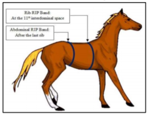 Equine Lung testing noninvasive device