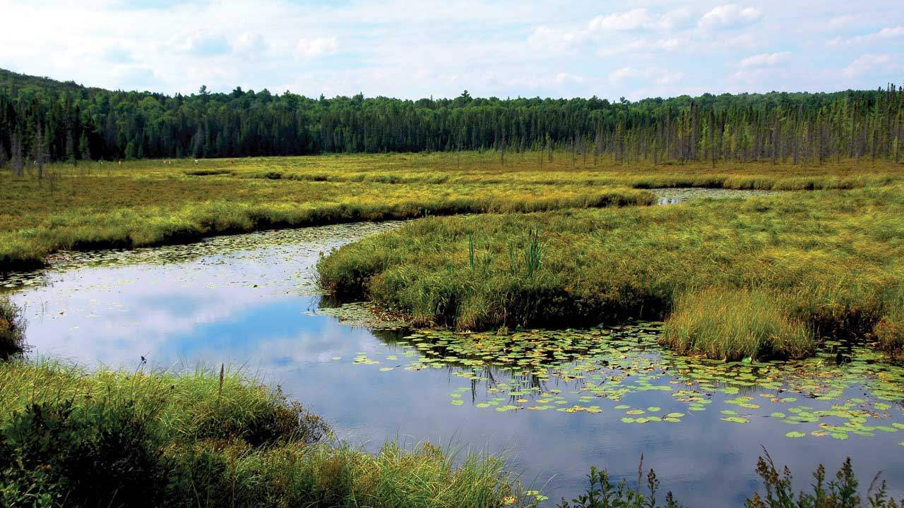 A photo of a wetland lined with trees and a cloudy sky.