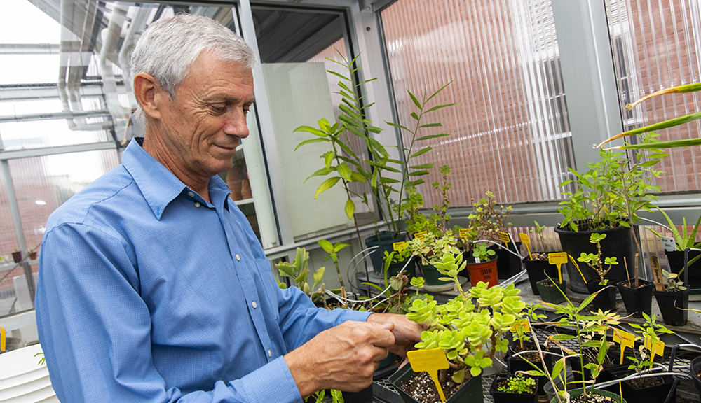 WPI greenhouse manager