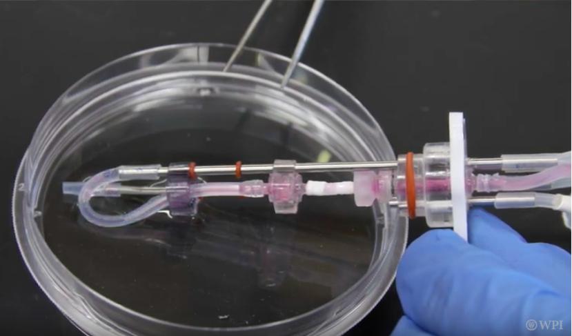 Rolle Lab Engineered Blood Vessel