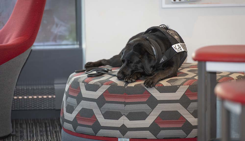 K9 Bella curls up for a quick nap on a chair in the Foisie Innovation Studio.