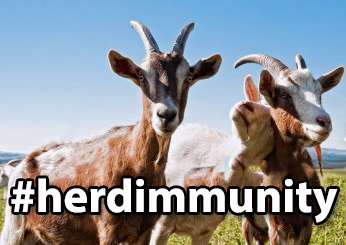 Three goats #herdimmunity