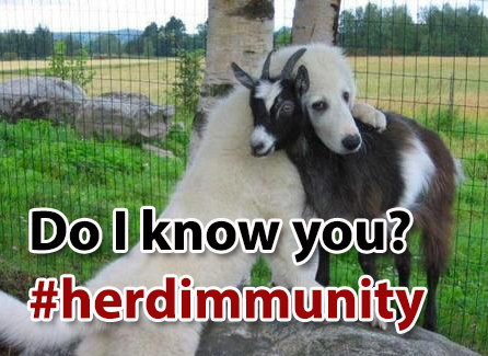 "Dog hugging goat with text ""Do I know you?"" #herdimmunity"