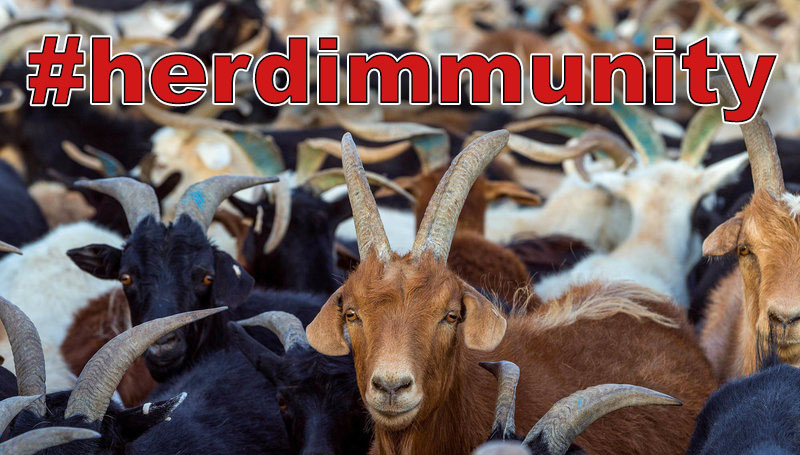 Herd of goats with text #herdimmunity