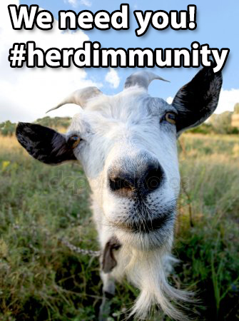 "Goat sayint ""We need you"" #herdimmunity"