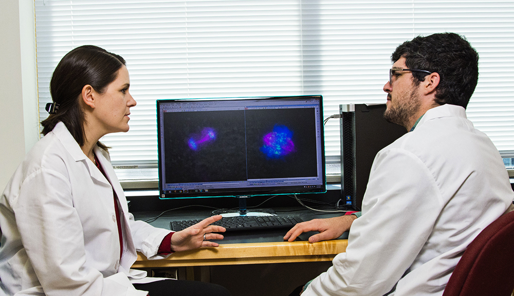 Biology, computer science, and mathematics—these disciplines contribute to advances in biological and biomedical science. At WPI, collaboration between disciplines leads to greater discoveries.