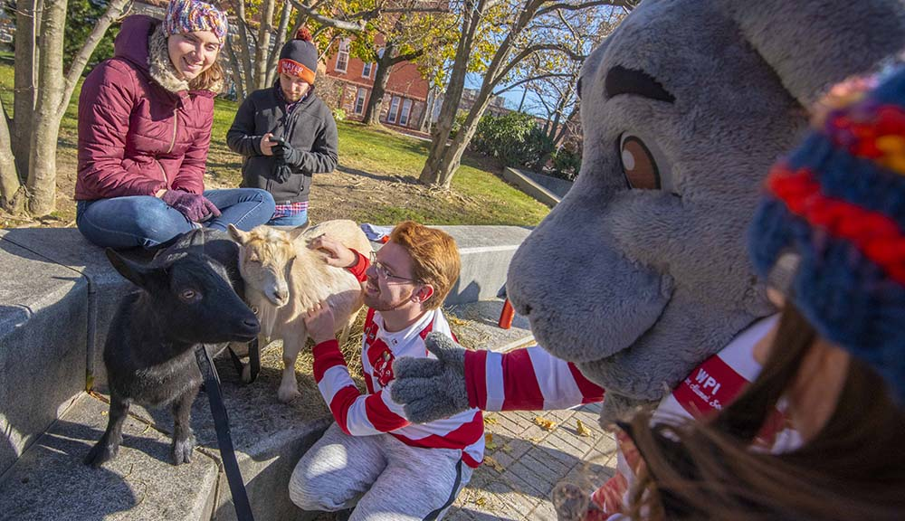 Gompei greets two goats visiting campus for Founders Day.