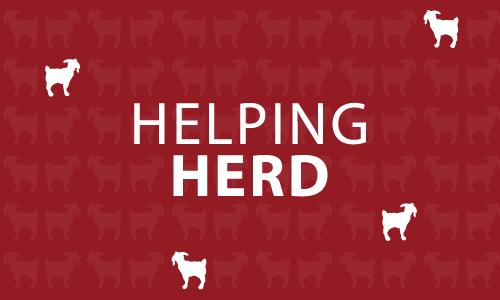 WPI's Helping Herd