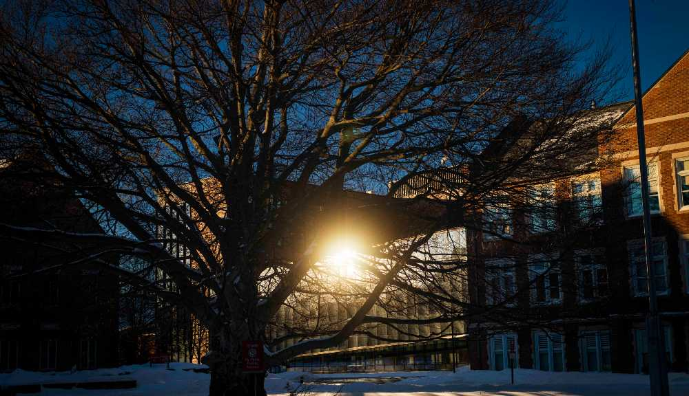 A photo of the sun shining off the Foisie Innovation Studio from between the branches of the beech tree in the center of campus.