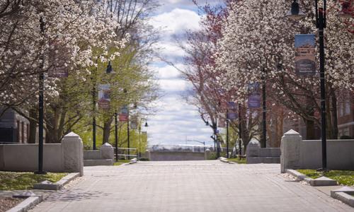 campus walkway in spring