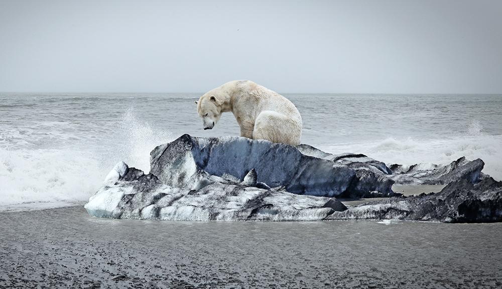 A polar bear on an ice floe. (Getty Images)