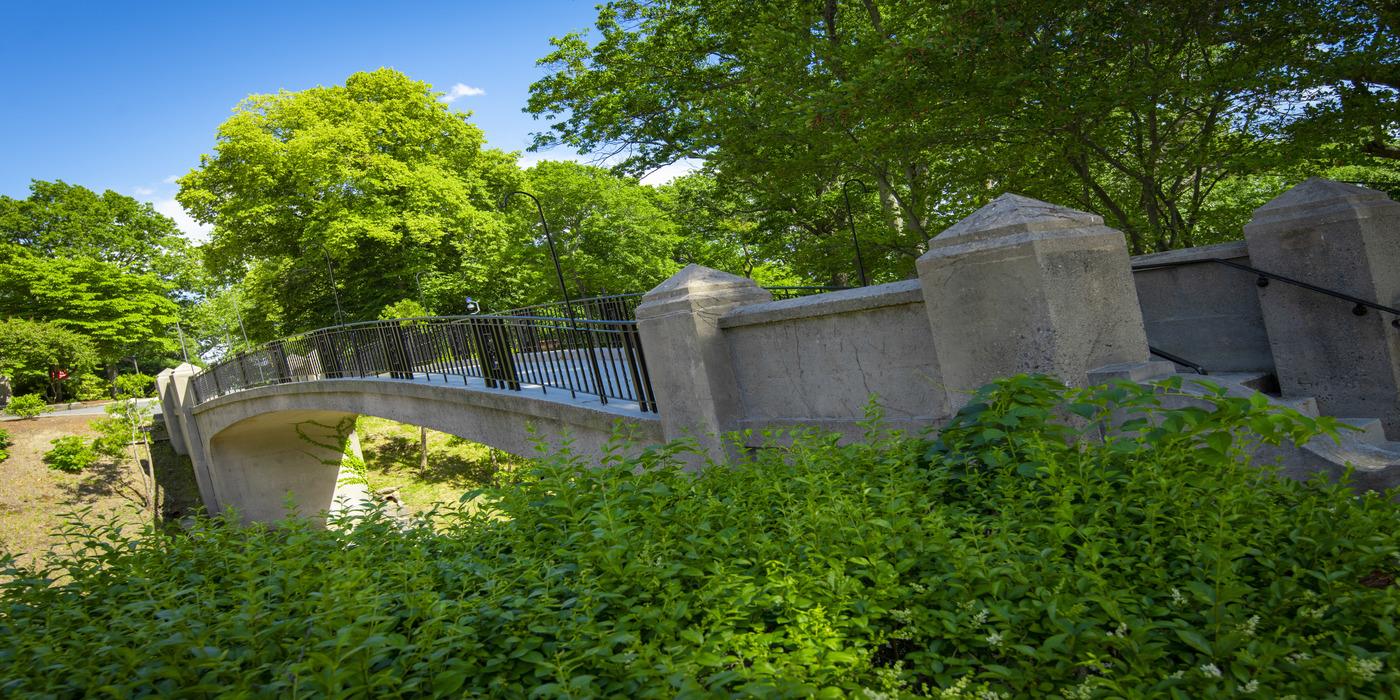 Earle Bridge with greenery