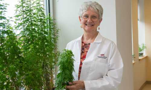 Pamela Weathers poses with an Artemisia annua plant.