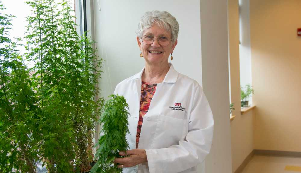 Pam Weathers poses with an Artemisia annua plant.