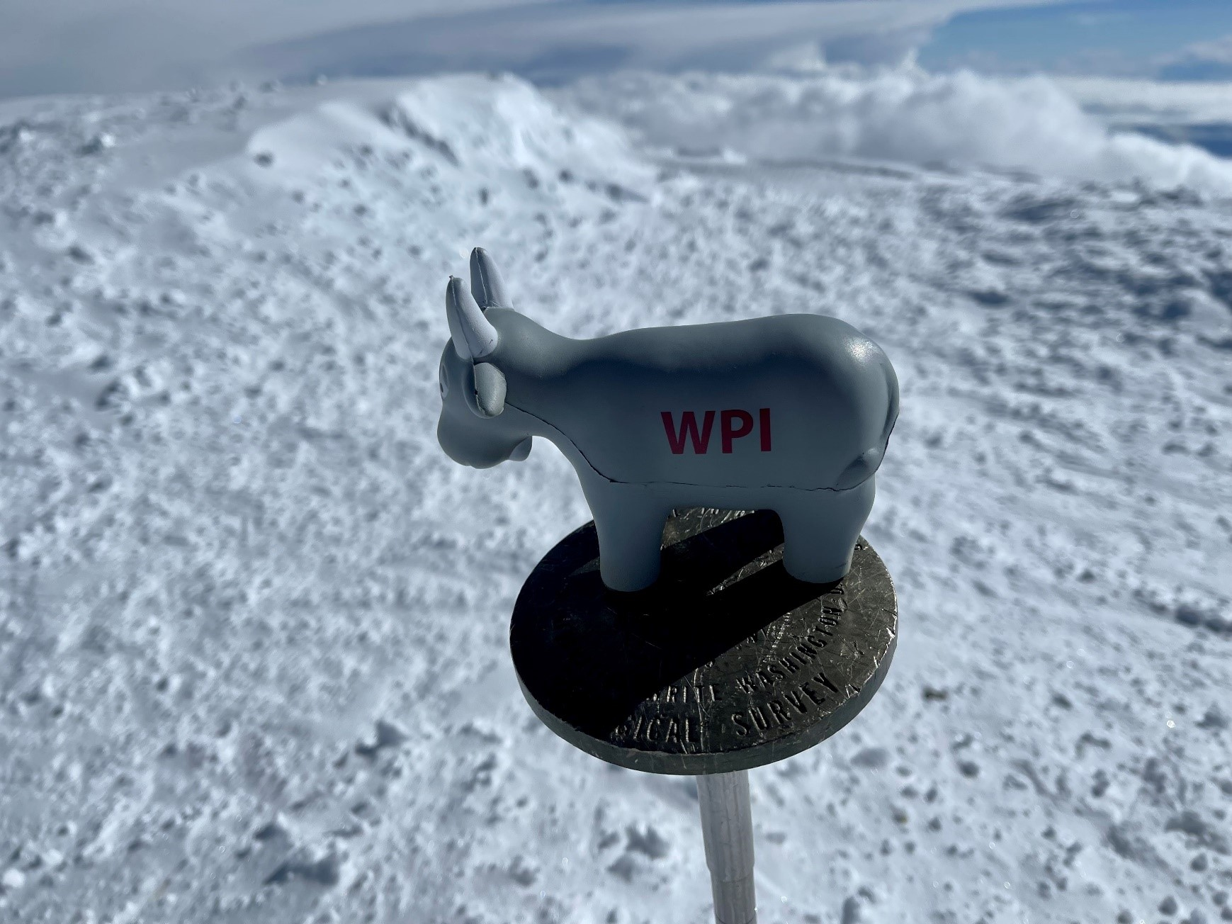 Gompei sits on the summit marker atop Denali, more than 20,000 feet above sea level