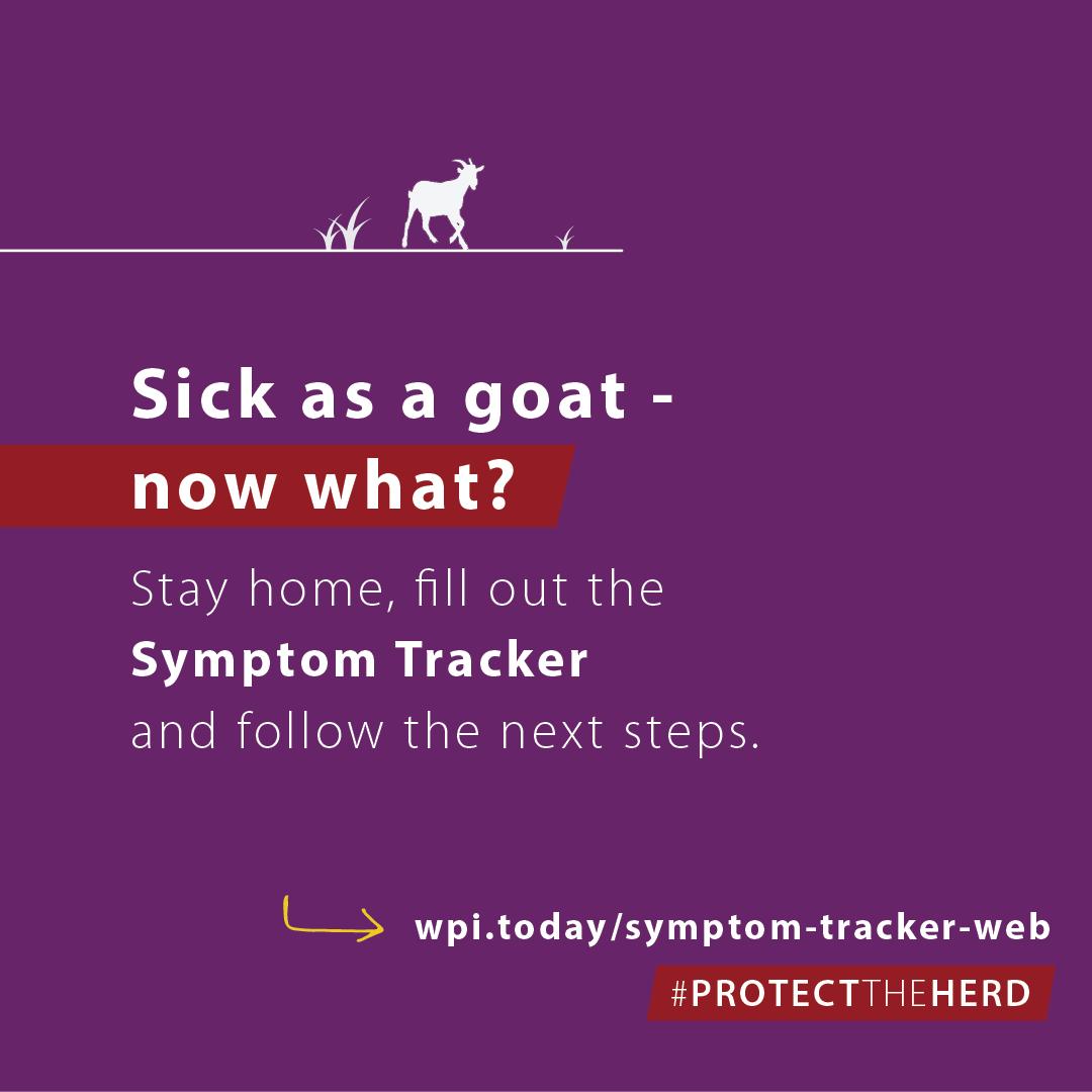 sick as a goat