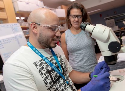 Olsen and post-doctoral fellow Sebastian Abella examine the flatworms they use as model systems for their research.
