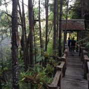 Members of the Thailand IQP team traverse a walkway through the forest.