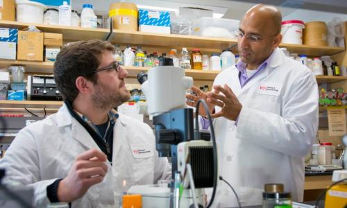 From left, Christopher Chute, a PhD candidate in biology and biotechnology, and Jagan Srinivasan discuss a recent experiment with C. elegans. alt