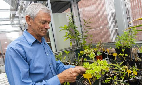 Mike Bocka observes a plant in the WPI greenhouse atop Salisbury Labs.