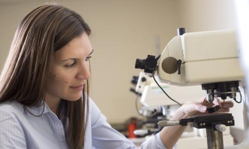 WPI professor at microscope