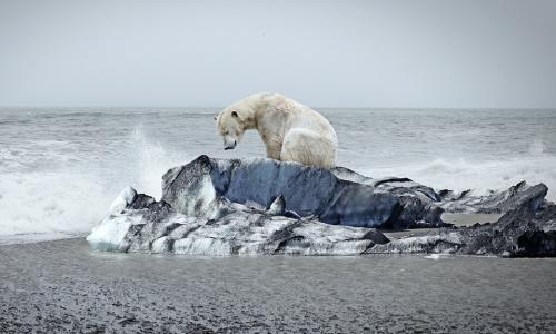 A polar bear on an ice floe. (Getty Images) alt